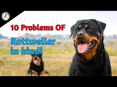 10 Problems OF Rottweiler in hindi / problems of dogs / Rottweiler