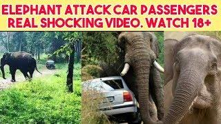Elephant Attack Passengers Shocking Video |Animals Attack |Elephant Attack|Rajtecinfo