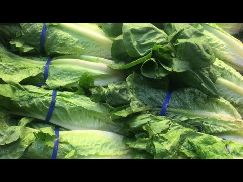 At least 64 infected in E. coli outbreak tied to romaine lettuce