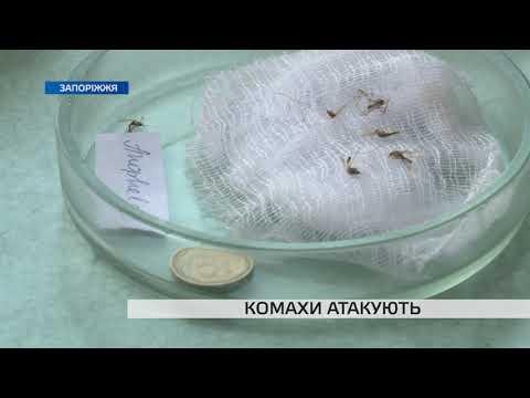 Телеканал TV5: Що робити, якщо вас вкусила комаха: поради спеціалістів