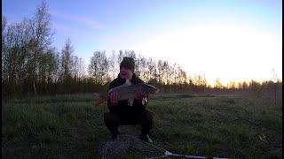 Рыбалка с ночевкой Любопытная лиса Мой рекордный карп Нерест карпа Рыбалка на фидер Лето 2020