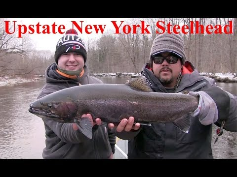 Upstate New York Winter Steelhead