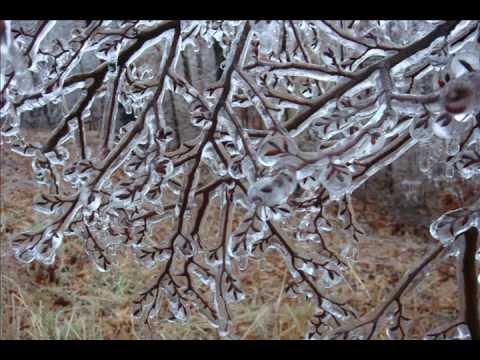 Ice Storm of early 2009 Troy, Union City, Hornbeak, Samburg, Obion, Tennessee