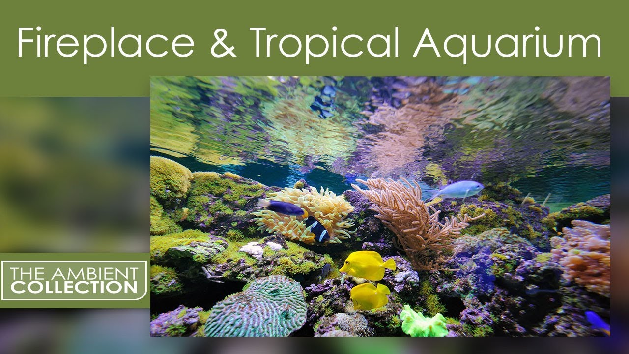 ambient dvd fireplace and tropical aquarium 2 hours of hd
