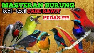 Download MASTERAN BURUNG KECIL KECIL CABE RAWIT PEDAS !!! PILIHAN JURI 2020