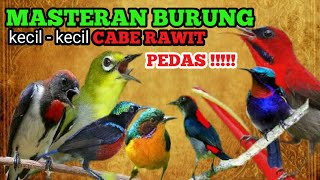 MASTERAN BURUNG KECIL KECIL CABE RAWIT PEDAS !!! PILIHAN JURI 2020