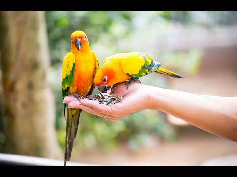 фото попугай