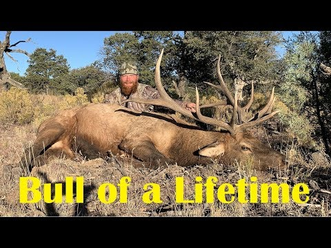 The Bull Of A Lifetime - New Mexico Elk Hunt - Part 2