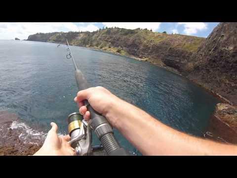 Norfolk Island spearfishing update 9
