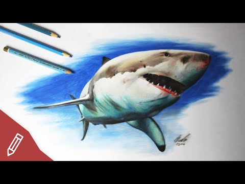 Drawing A Shark – HYPER REALISTIC ART with COLORED PENCILS | Time Lapse