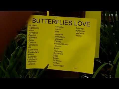 Flowers Butterflies LOVE!!!!
