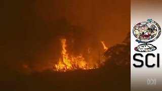 Australia's Fire Vortex: The Catastrophic Mix Of Bushfire And Tornado