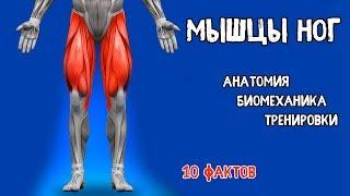 Смотреть видео биомеханика мышц человека бодибилдинг