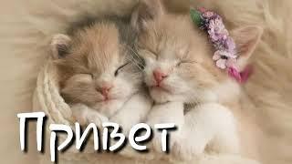 ТОП 3 самые милые  породы  кошек