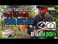 Tips & trick perawatan pleci ala M Daffa PMCS (pleci mania ciledug sekitarnya)