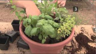 How To Plant A Herb Pot