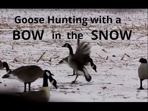 Bow Hunting Geese, WE LIMIT OUT!!!!