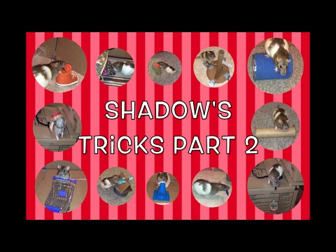 Shadow The Rat's Amazing Tricks Part 2