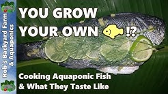 YOU GROW YOUR OWN FISH!?  Cooking Aquaponic Fish & What They Taste Like