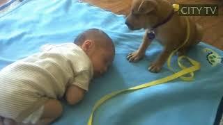 Sleepy Puppy falls asleep on baby