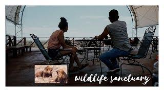 visiting rescued wild animals :')