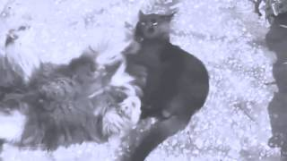 A COMPILATION OF SONGS AND VIDEO ABOUT CATS