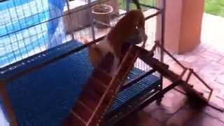 Dog Agility Training At Home