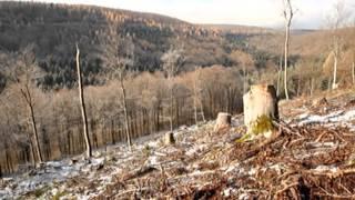 Kahlschlag im Wald für die Energiewende | REPORT MAINZ | DAS ERSTE | SWR