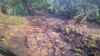 Pikat ayam hutan tewas 2018