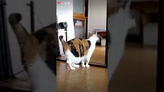 Знаете как танцуют кошки и коты?
