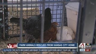 Farm animals rescued from small space in Kansas City, Mo.
