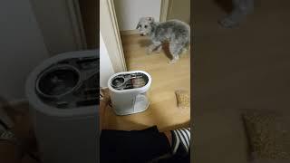 팝콘 기계가 무서운 강아지