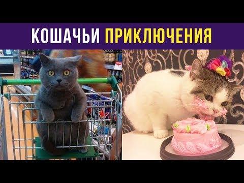 Приколы с котами. Кошачьи приключения | Мемозг #38