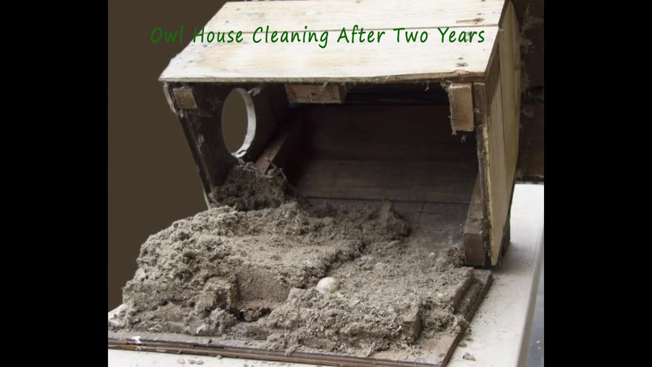owl house cleaning