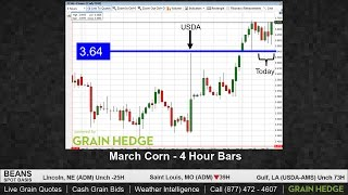 Corn Defies Market Trend to Close Higher