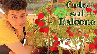 ORTO SUL BALCONE 🌱 TUTORIAL Passo Passo per far crescere Frutta e Ortaggi e per gestire il balcone