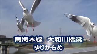 【南海電車】南海本線 大和川橋梁でユリカモメ