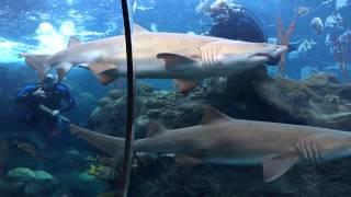 The Florida Aquarium - Tampa Bay, Florida