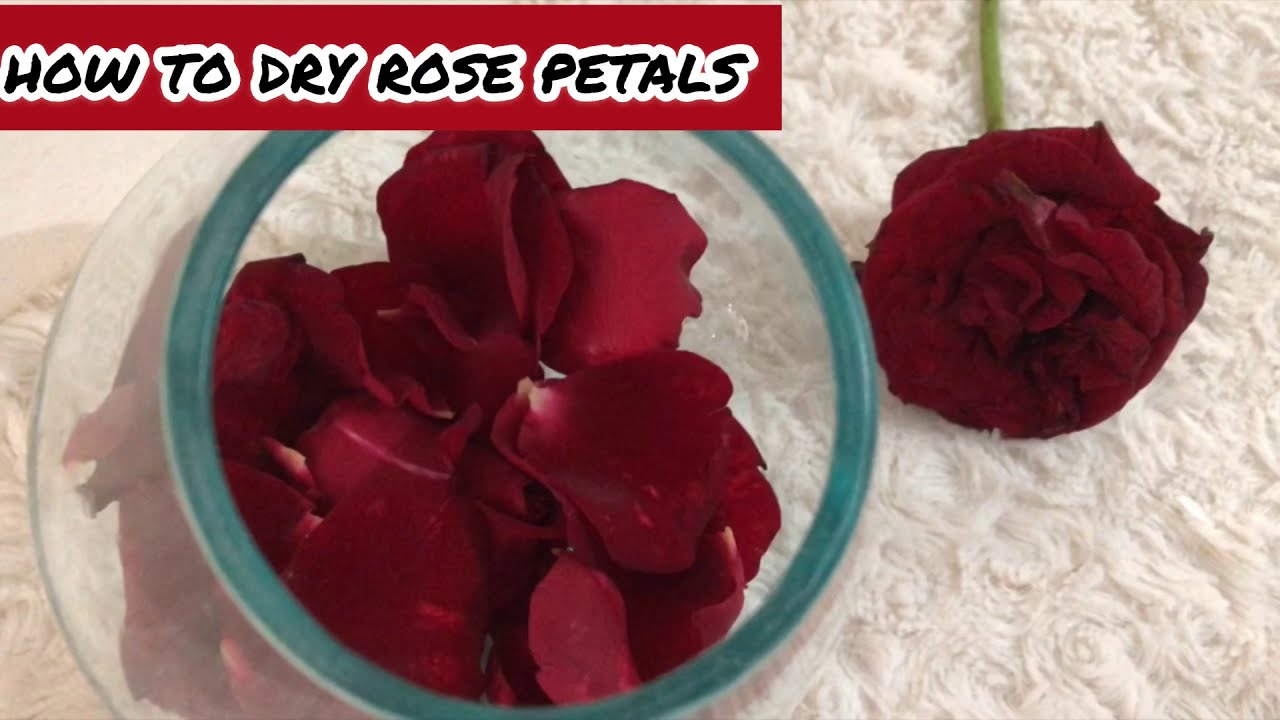 how to dry rose petals in oven