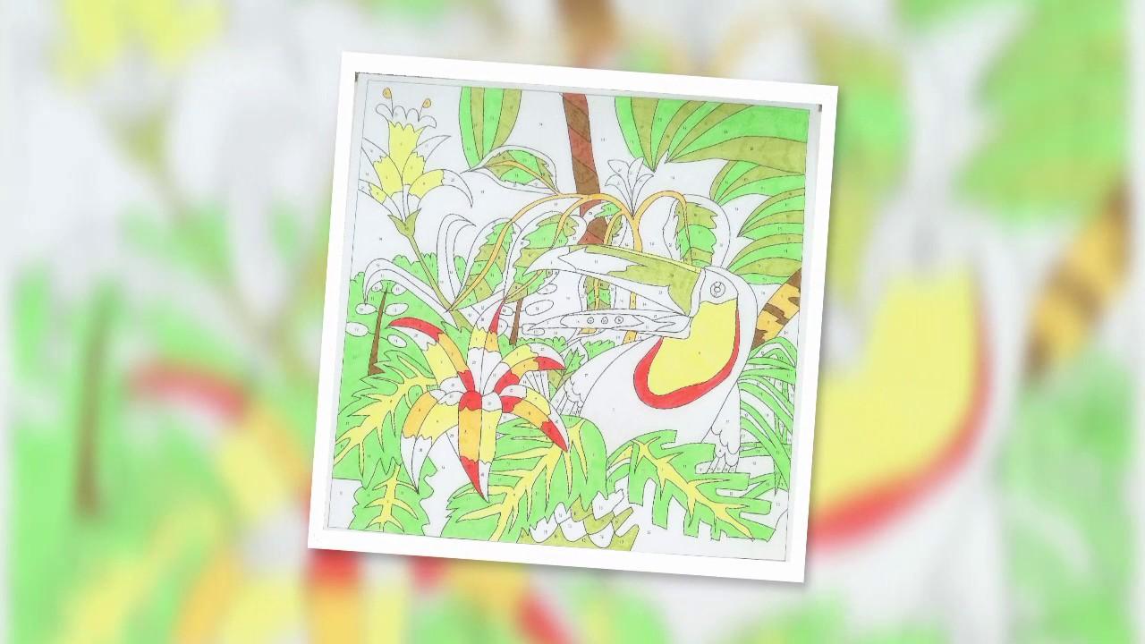 Dschungel Ausmalbilder 1 Tukan