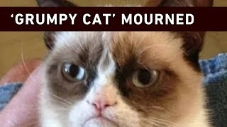 """We are unimaginably heartbroken to announce the loss of our beloved 'Grumpy Cat',"" her owners said in a statement on Twitter."