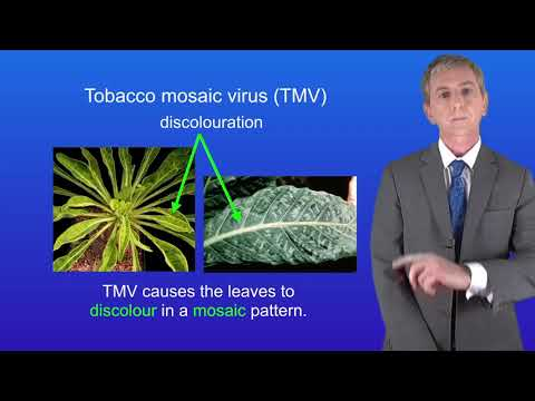 GCSE Science Biology (9-1) Infectious diseases in plants