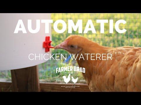 Refills Automatically -  Chicken Waterer by Farmer Brad