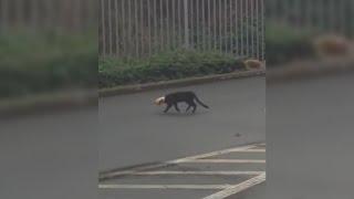 🔴 Un chat qui a du mal a trouver son chemin ! adoptez via la spa pour que ça cesse [HD]