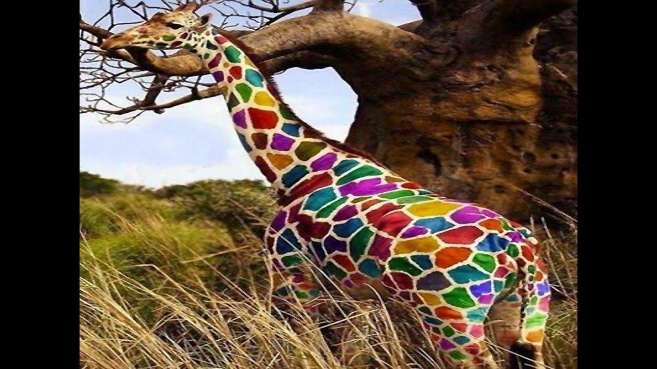Animales De Colores Raros Captados En Cámara - Top 10 - YouTube