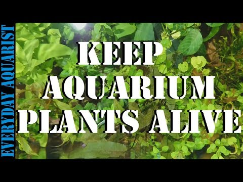 Why Aquarium Plants Go Brown And Die