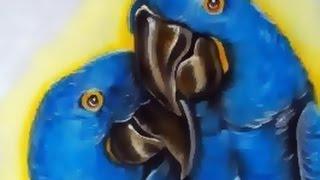 Reapresentação de Aula Araras Azuis