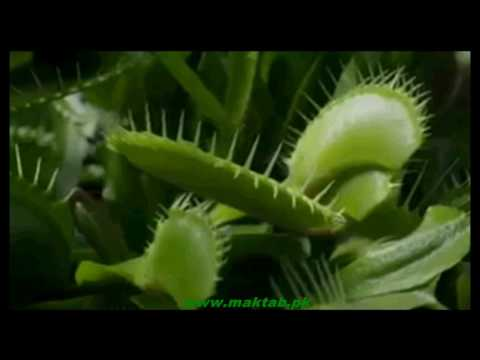 FSc Biology Book1, CH 12, LEC 3; Heterotrophic Nutrition in Plants Part 2