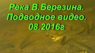 Подводное видео.Кормушка FEEDER SPORT.Река Восточная Березина.наживка опарышы,прикормка дунаев лещ..