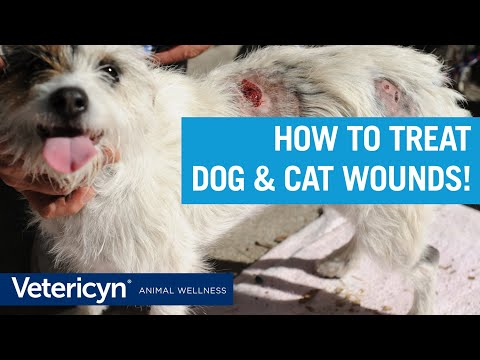 How To Treat Dog & Cat Wounds with Vetericyn Liquid and Antimicrobial Hydrogel